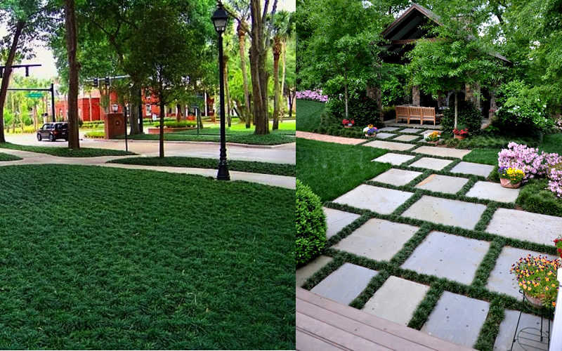 Dwarf Grasses Landscaping Buy dwarf mondo grass for sale online from wilson bros gardens add workwithnaturefo