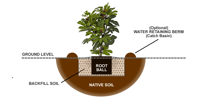 If Your Soil Stays Constantly Soggy Or Wet Take Measures To Improve Drainage In The Planting Site
