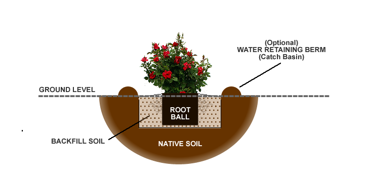 Planting Diagram Knock Out Roses