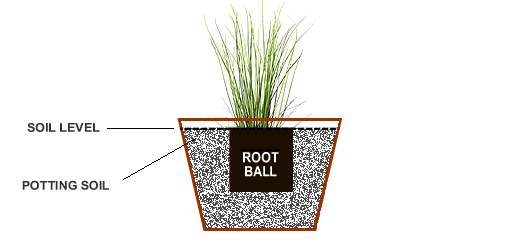 How to plant miscanthus eulalia grasses from the experts at wilson set the plant in the container and make necessary adjustments by adding or removing some soil so that the top edge of the root ball will sit 1 or so below ccuart Images