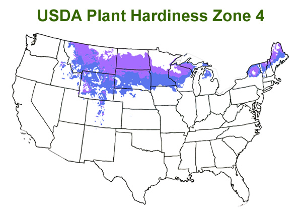 Buy The Best Cold Hardy Bamboo Plants That Will Grow In Usda Zone