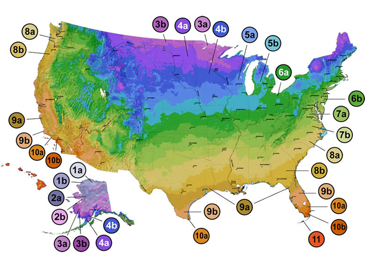 the usda plant hardiness zone map was created so that gardeners growers and landscapers have a way to compare the average lowest temperature in their area