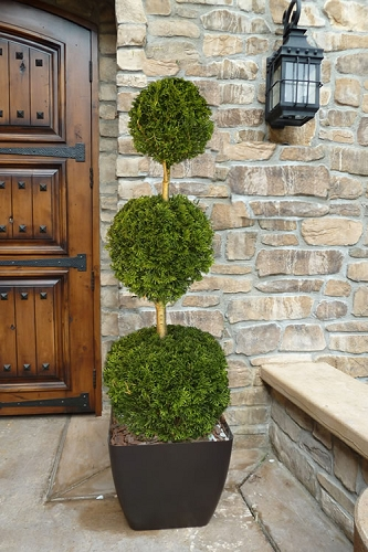 Emerald Green Arborvitae Poodle Tier Topiary (3 Ball) - 5 Gallon Pot