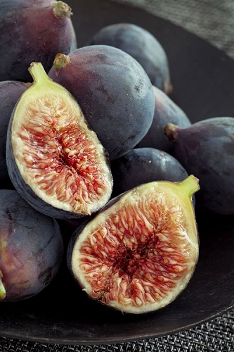 Chicago Cold Hardy Fig Tree - 1 Gallon Pot