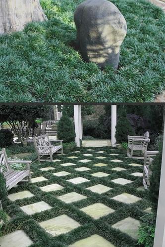 Read Customer Reviews Of Wilson Bros Gardens Online Plant Nursery