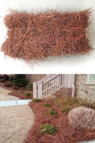 Long Leaf Pine Straw Needles