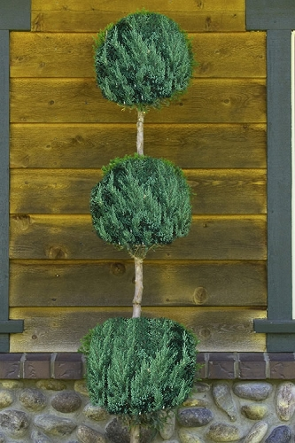 Blue Point Juniper Poodle Tier Topiary